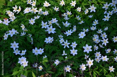 Obraz wiosna w lesie - fototapety do salonu
