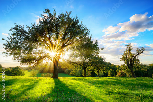Tuinposter Bomen The sun shining through a tree on a green meadow, a vibrant rural landscape with blue sky before sunset