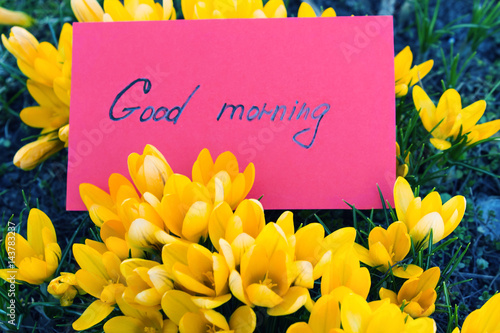 Yellow flowers of crocuses with a red card with the text good yellow flowers of crocuses with a red card with the text good morning toned photo mightylinksfo
