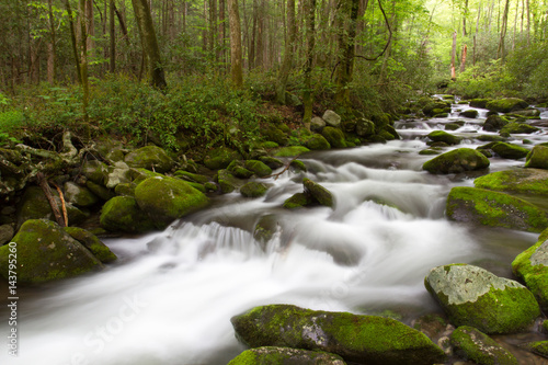 Fototapety, obrazy: Roaring Forks Motor Trail Details in the Smoky Mountains