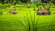 Leinwanddruck Bild - Two huts in Lush green Rice tarrace in Sidemen, Bali, Indonesia