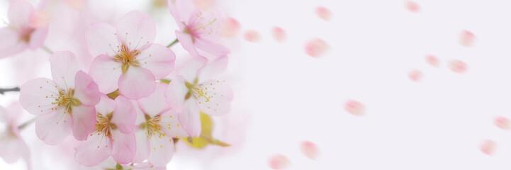 Panel Szklany Japoński さくら 桜