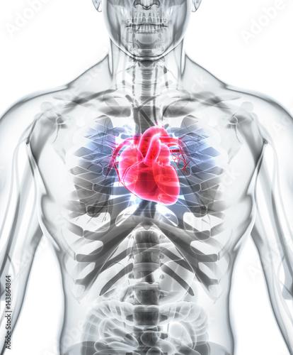 ilustracja-serca-i-klatki-piersiowej-czlowieka