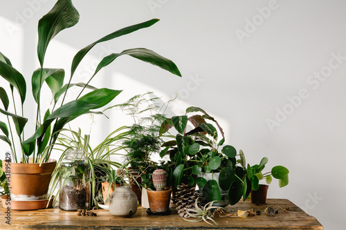 Plants grouped on table