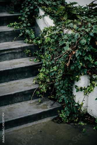 Fotobehang Tuin Grey stoop with green ivy
