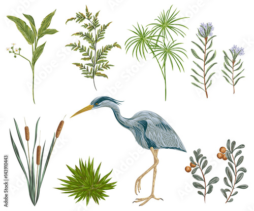 Fototapeta  Heron bird and swamp plants