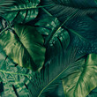 canvas print picture - Creative tropical green leaves layout. Nature spring concept. Flat lay.
