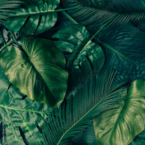 Creative tropical green leaves layout. Nature spring concept. Flat lay. Wall mural