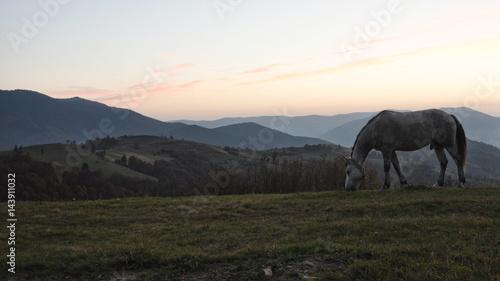 Fototapeta horse pasture morning fog dew obraz na płótnie