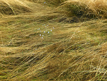 Dry Lying Beautiful Grass With Small Field Flowers