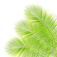 NaklejkaCoconut leaf isolated