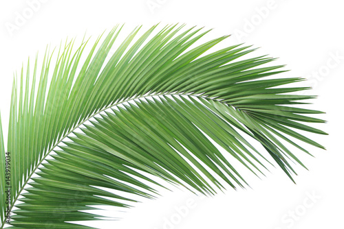 Poster Palmier Green palm leaf isolated
