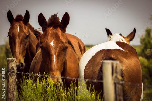 Photo three horses
