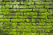 Moss On Old Brick Wall