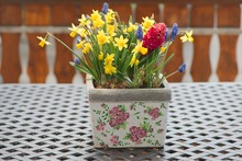 Flower Pot With Spring Flowers (daffodils, Hyacinth And Grape Hyacinth) On A Garden Or Balcony Table