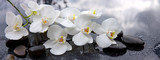 Fototapeta Kitchen - White orchid and black stones close up.