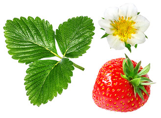 Panel Szklany Owoce green leafs of strawberry with flower isolated