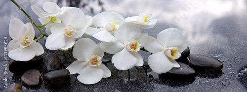 Fotobehang Bloemenwinkel White orchid and black stones close up.