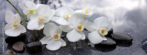 Foto-Schiebegardine ohne Schienensystem - White orchid and black stones close up.