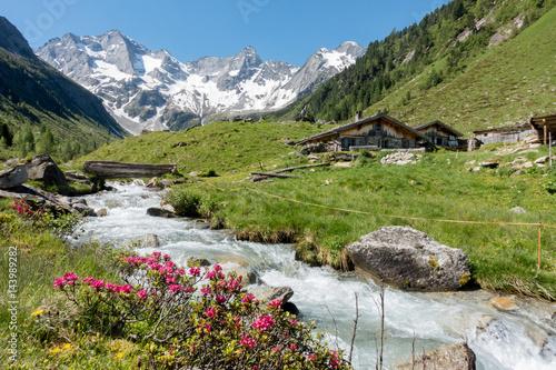 Foto  Almhütten mit Gebirgsbach Alpenrosen und Gletscher im Hintergrund
