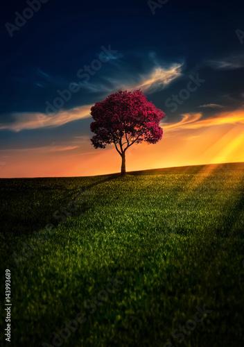 Awesome Solitude/ sunset landscape