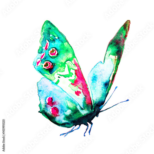 blue butterfly,watercolor,on a white