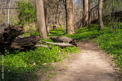 Tuinposter Weg in bos Pathway in Forest