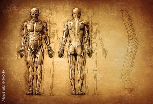 Cuadros en Lienzo human anatomy drawing, old, canvas