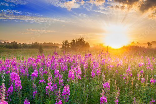 In de dag Bleke violet rural landscape with sunrise and blossoming meadow