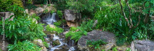 The panoramic view of small waterfall which runs and hitting rocks with lots of tripical plants and ferns in Brisbane Botanical Garden Mt Coot-tha, Australia