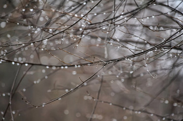 Vintage photo of rain drops on branches
