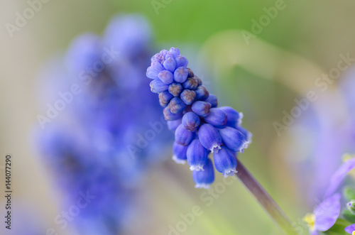 Flower detail in spring