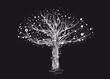 Leinwanddruck Bild - ein alter weißer Baum. Die Zweige leuchten im Mondschein und die Sterne der klaren Nacht tanzten in der Baumkrone.