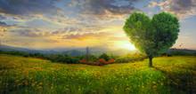 Panorama Of A Heart Tree