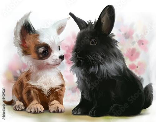 Szczeniak Chihuahua i czarny królik