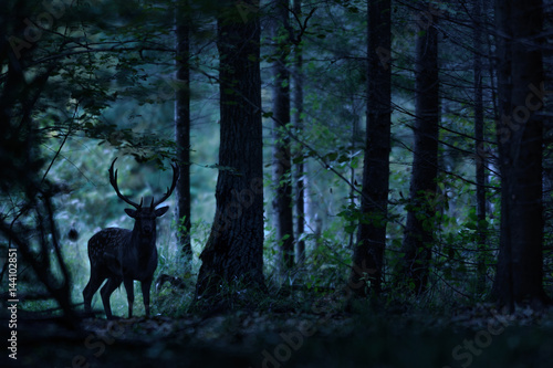 Poster Cerf Night forest landscape with deer