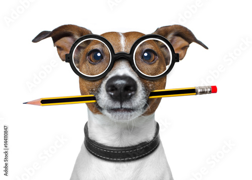 Photo sur Aluminium Chien de Crazy dog with pencil at the office