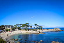 Nature: Pacific Grove