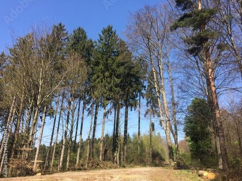 Fototapeta Frühlingserwachen im Wald obraz na płótnie