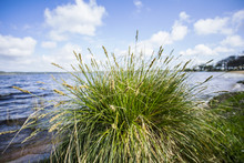 îlot D'herbes