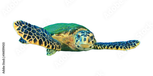 Poster Tortue Sea Turtle isolated on white background