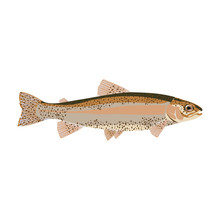 Natural Flat Trout