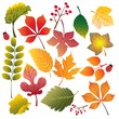 leaves of different colors and sizes
