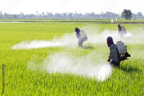 Fotografía farmer spraying pesticide in the rice field