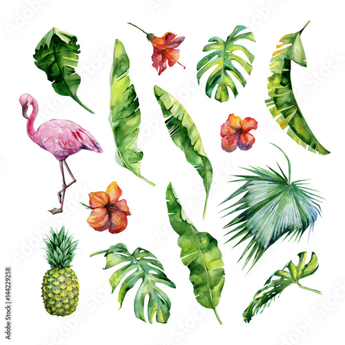 Watercolor illustration set of tropical leaves, dense jungle, flamingo bird and pineapple. Tropic summertime motif may be used as background texture, wrapping paper, textile,wallpaper design. Wall mural