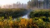 Puszcza Knyszyńska i rzeka Supraśl