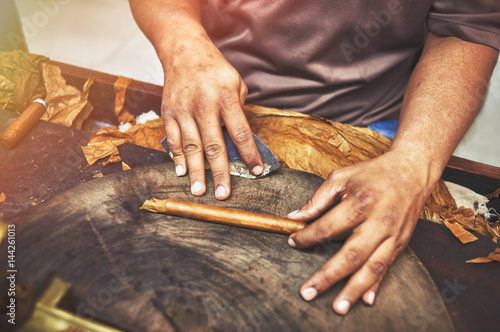 Closeup of hands making cigar from tobacco leaves