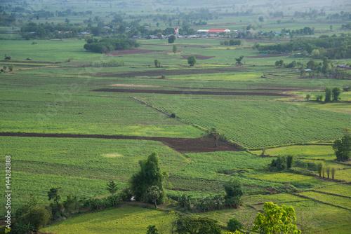 Fotobehang Rijstvelden Green Field