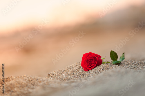 Single rose on the beach.