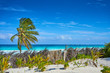 Untouched paradise under marvelous coconut trees / Tropical beach of Tulum in Mexico